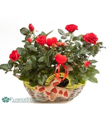 """Kosz """"70 czerwonych róż"""""""